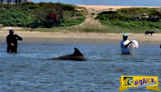 Η πόλη όπου τα δελφίνια βοηθάνε τους ψαράδες!