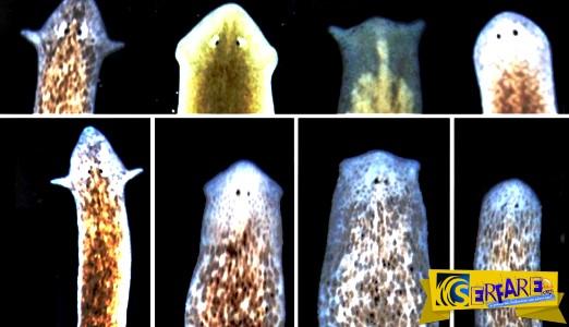 Επιστήμονες έφτιαξαν σκουλήκια «Φρανκεστάιν» αλλάζοντας τον εγκέφαλό τους!
