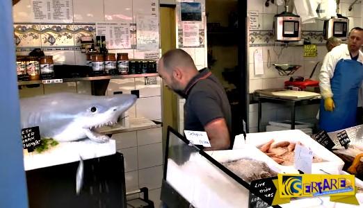 Δείτε τι έγινε όταν ζωντάνεψε καρχαρίας σε ιχθυοπωλείο!