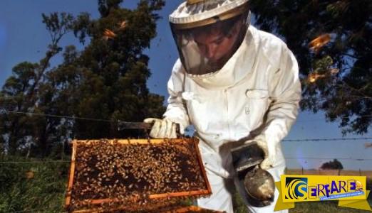 Μελισσοκομία: Ξεκίνημα από το μηδέν, το εισόδημα και οι τρέχουσες επιδοτήσεις