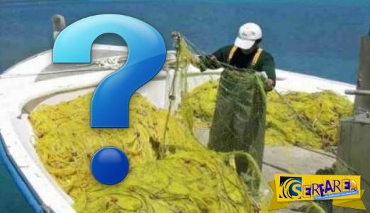 Τα δίχτυα του ψαρά για αθερίνα έκρυβαν μία απίστευτη έκπληξη! Άφωνος όταν είδε περί τίνος επρόκειτο…