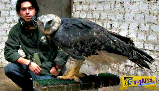 Αυτό το πουλί είναι ένα από τα μεγαλύτερα του κόσμου και κρύβει ένα ανησυχητικό μυστικό!