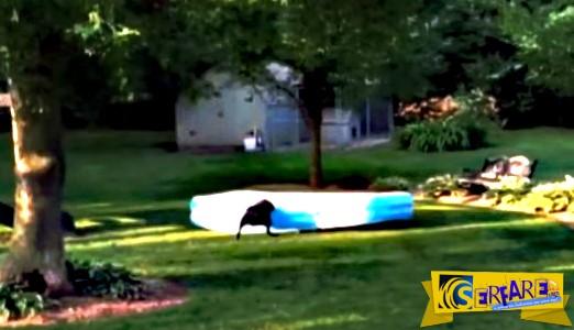 Τα παιδιά κρύφτηκαν κάτω από την φουσκωτή πισίνα - Όταν τα εντόπισε ο σκύλος έγινε κάτι ξεκαρδιστικό!