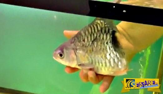 Το… μισό ψάρι που επιβίωσε για έξι μήνες!