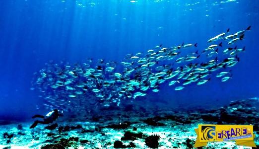 Δεν πίστευαν στα μάτια τους με αυτό που βρήκαν μέσα στην ψαριά της ζωής τους!