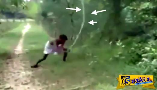 Σόκ: Σκοτώνει βασιλική κόμπρα με γυμνά χέρια επειδή σκότωσε τον γιο του - Δείτε το βίντεο ...