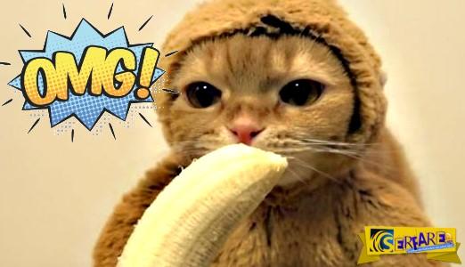 Ξεκαρδιστικό βίντεο: Η γάτα ντύθηκε μαϊμού και τρώει μπανάνες!