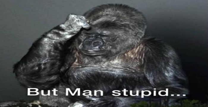 gorilas-koko