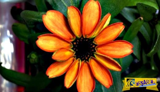 Το πρώτο λουλούδι που άνθισε στο διάστημα είναι γεγονός!