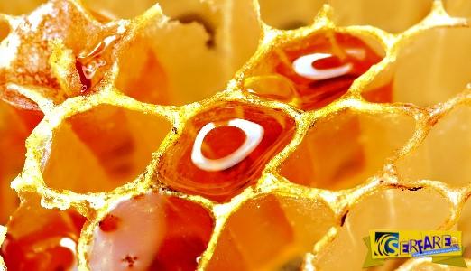 Η αλήθεια για το… μέλι: Δεν φαντάζεστε τι είναι στην πραγματικότητα!