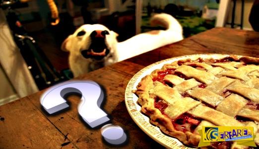 Πως βγήκε η φράση: Ήθελε και την πίτα ολόκληρη και τον σκύλο χορτάτο!