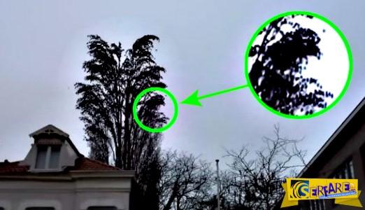 Κοιτάξτε πιο κοντά αυτό το δέντρο γιατί δεν είναι κανονικό - Στο 0:16 θα καταλάβετε το λόγο!