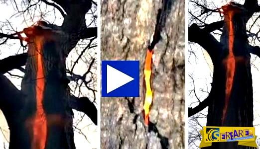 Το δέντρο του διαβόλου – Καίγεται μόνο το εσωτερικό του!