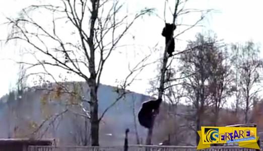 ΣΟΚ! Αρκούδα κυνηγάει έναν άνδρα ακόμα και πάνω στο δέντρο!