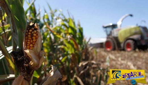 Επιστήμονες συνδέουν την Monsanto με τις εμφανίσεις γενετικών ανωμαλιών του ιού Ζίκα