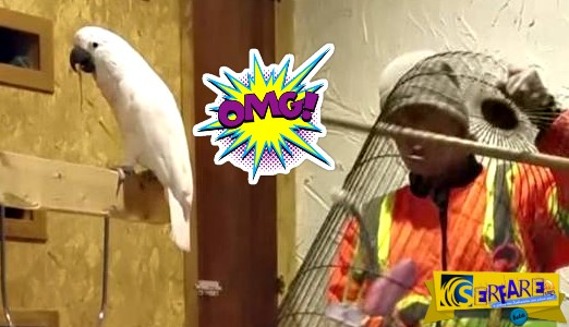 Αυτός ο παπαγάλος βρίζει (και μάλιστα πολύ) γιατί του έσπασαν το κλουβί!