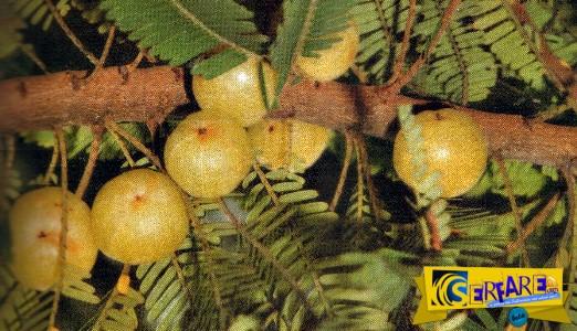 Το πιο ισχυρό φρούτο του πλανήτη - Έχει 20 φορές περισσότερες βιταμίνες από το πορτοκάλι!