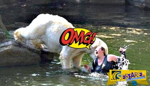 Όταν οι άνθρωποι υποτιμούν την επιθετική φύση των άγριων ζώων!