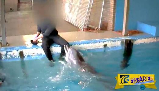 Φρίκη: Εργαζόμενος σε ενυδρείο ικανοποιεί εpωτικά ένα… δελφίνι!