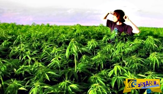 Νόμιμη και επίσημα η καλλιέργεια κάνναβης: Ποιοι είναι οι όροι και οι προϋποθέσεις