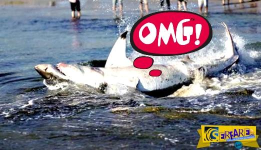 Άνοιξαν την κοιλιά νεκρού καρχαρία με μαχαίρι και έμειναν άφωνοι!