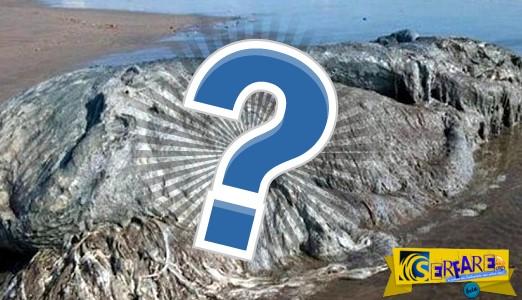 Μυστηριώδες πλάσμα ξεβράστηκε στις ακτές του Μεξικό!