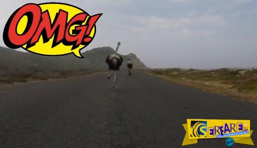 Θα κλάψετε από το γέλιο - Στρουθοκάμηλος άρχισε να κυνηγά... ποδηλάτες