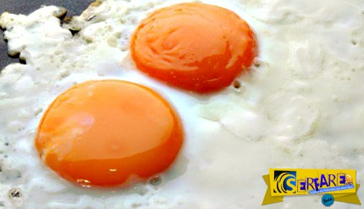 Peta: Το αυγό είναι η έμμηνος ρύση της κότας! Ένα αιφνιδιαστικό μήνυμα ...