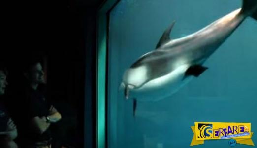 Το δελφίνι κολυμπά κοντά στο τζάμι - Λίγο μετά συνέβη ένα θαύμα!