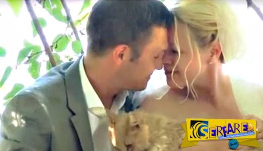 Ένας διαφορετικός γάμος με καλεσμένες ... 1.000 γάτες!