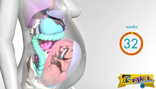 Πως αλλάζει το γυναικείο σώμα μέσα στους 9 μήνες της εγκυμοσύνης!