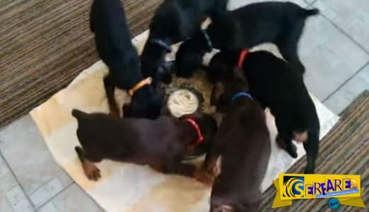 Ξεκαρδιστικό βίντεο: Aυτά τα κουταβάκια τρώνε το φαγητό τους κάνοντας κύκλους!