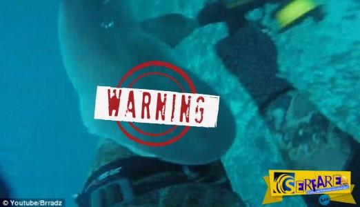 Τρόμος στα σαγόνια του καρχαρία - Κατέγραψε την επίθεση σε κάμερα!