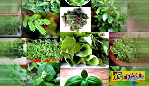 Πλήρης κατάλογος βοτάνων και οι θεραπείες τους – Τι ασθένειες θεραπεύει κάθε βότανο!