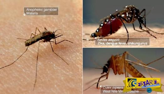 Οι έξι βελόνες που χρησιμοποιούν τα κουνούπια για να σας πιουν το αίμα!