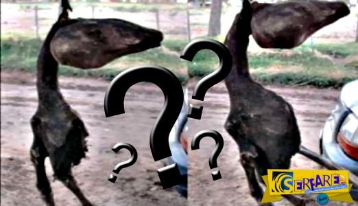 Παράξενο πλάσμα εντοπίστηκε στην Αργεντινή!
