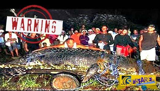 Τέτοιους γιγάντιους κροκόδειλους συναντάς μόνο στην Άγρια Αφρική!