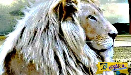 Αυτά είναι τα πιο σπάνια ζώα στον πλανήτη ...