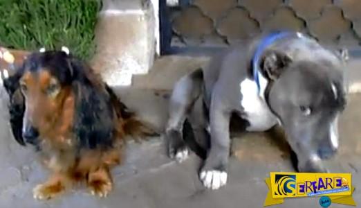 Το βίντεο που έγινε viral! Σκυλί κρύβει το πρόσωπό του από ντροπή, την ώρα που το μαλώνει το αφεντικό του!