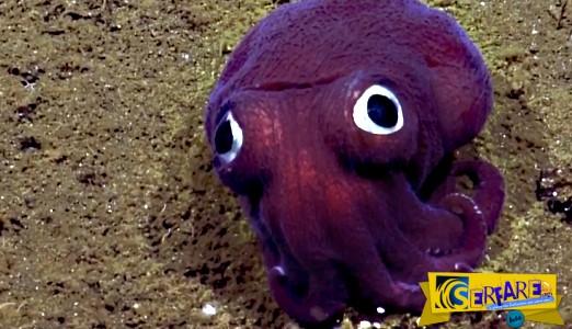 Είναι μοβ, έχει γουρλωμένα μάτια και ζει στη θάλασσα! Τι είναι;