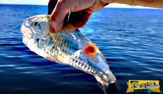 Ένα καταπληκτικό πλάσμα που ζει στους ωκεανούς του πλανήτη μας!