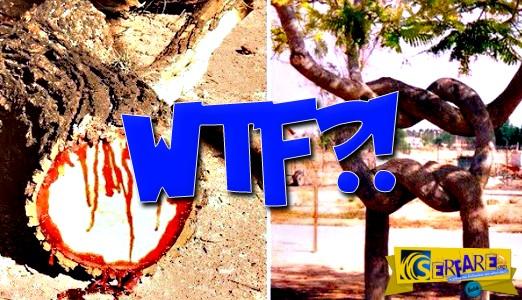 12 δέντρα που δεν θα πιστεύεις πως υπάρχουν - Σπάνια είδη που δεν μοιάζουν με κανένα άλλο!