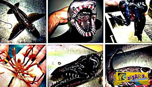 Βγαλμένα από ταινία τρόμου! Ο Ρώσος ψαράς και οι πραγματικά τρομακτικές ψαριές του!