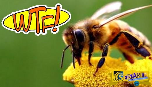 Βρετανοί ερευνητές έμαθαν σε μέλισσες να παίζουν ποδόσφαιρο!