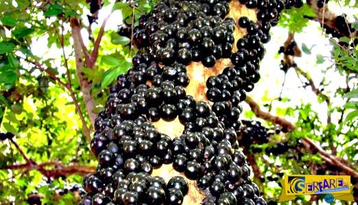 Κι όμως υπάρχουν! Δείτε βίντεο με τα πέντε πιο σπάνια φρούτα στον κόσμο!