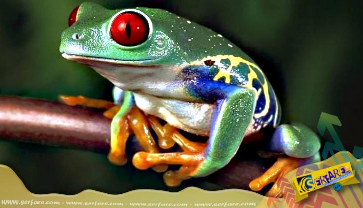 Αυτό είναι το πιο δηλητηριώδες ζώο στον κόσμο!