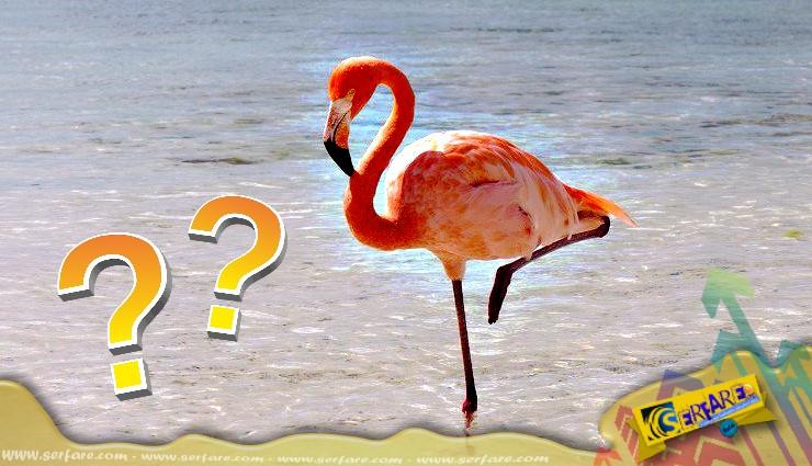 Γιατί τα φλαμίνγκο στέκονται στο ένα πόδι - Ιδιαίτερα και όταν στέκονται απλά!