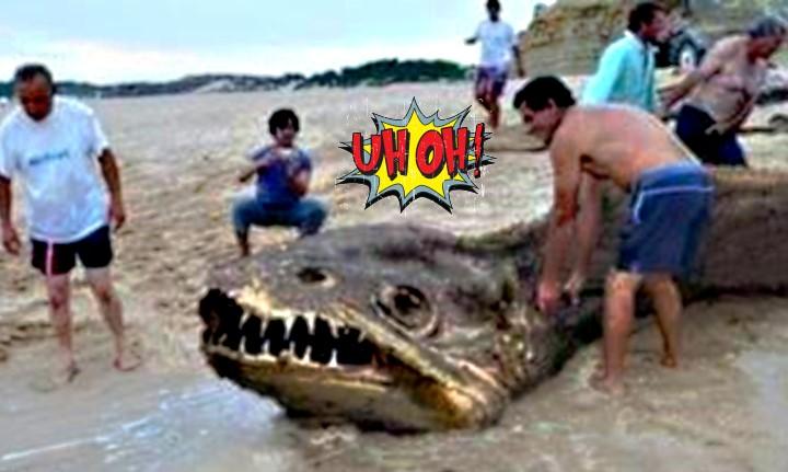 Μυστηριώδη πλάσματα που ξεβράστηκαν από τον ωκεανό!