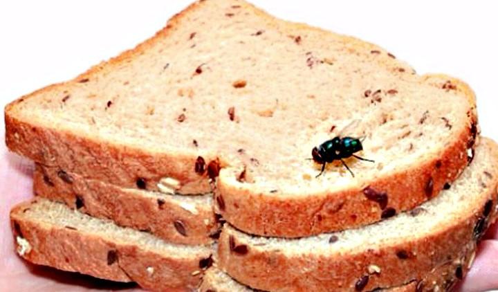 Τι συμβαίνει αν κάτσει μια μύγα στο φαγητό σας!