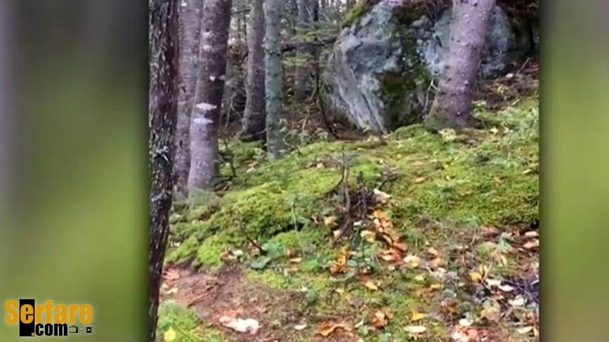 Σπάνιο και απόκοσμο φαινόμενο: Δάσος που «αναπνέει»